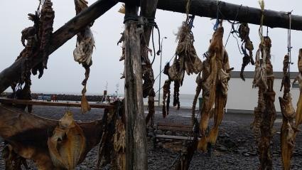 Iceland loves fish!